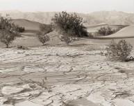 Death Valley Life