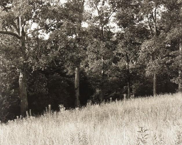 Forest's Edge, Ozarks