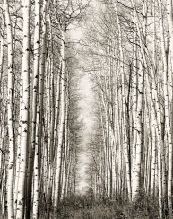 Aspen Cathedral