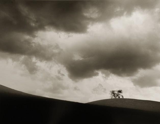 Gilded Horizon