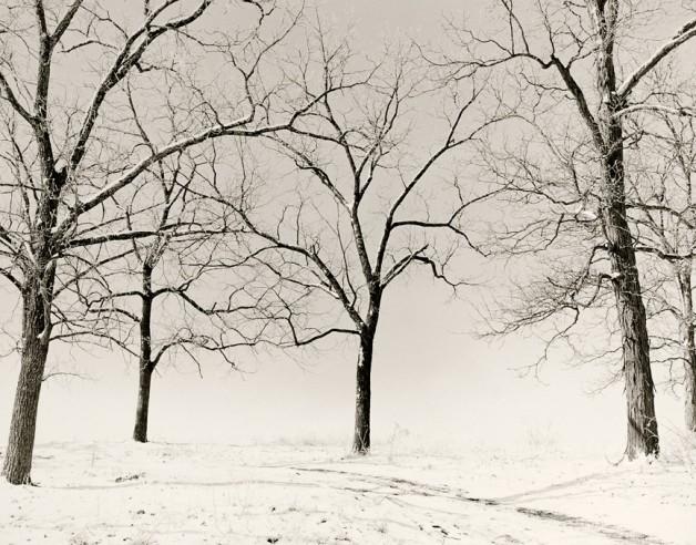 Snow Sentinels